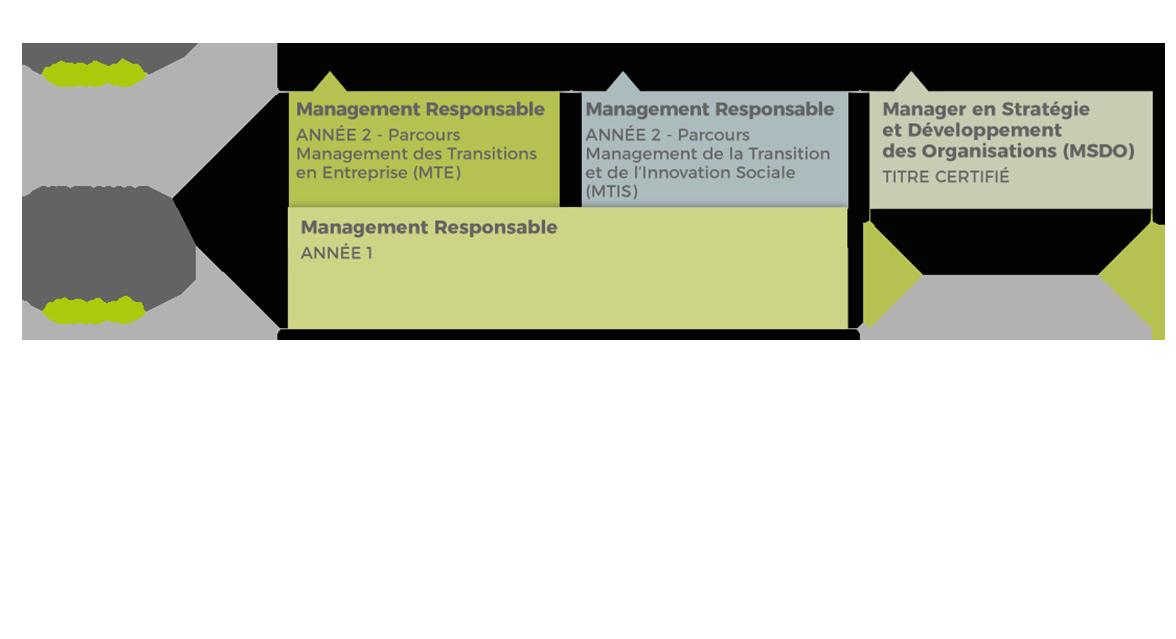 Schéma filière - Stratégie et Management